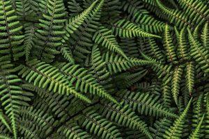 3d leaves wallpaper