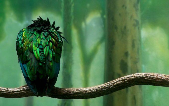 alone bird wallpaper background