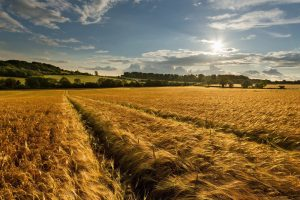 amazing wheat field wallpaper background