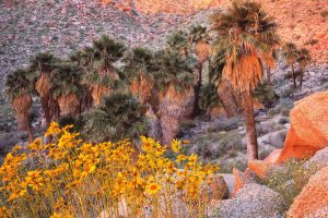 anza borrego wallpaper background