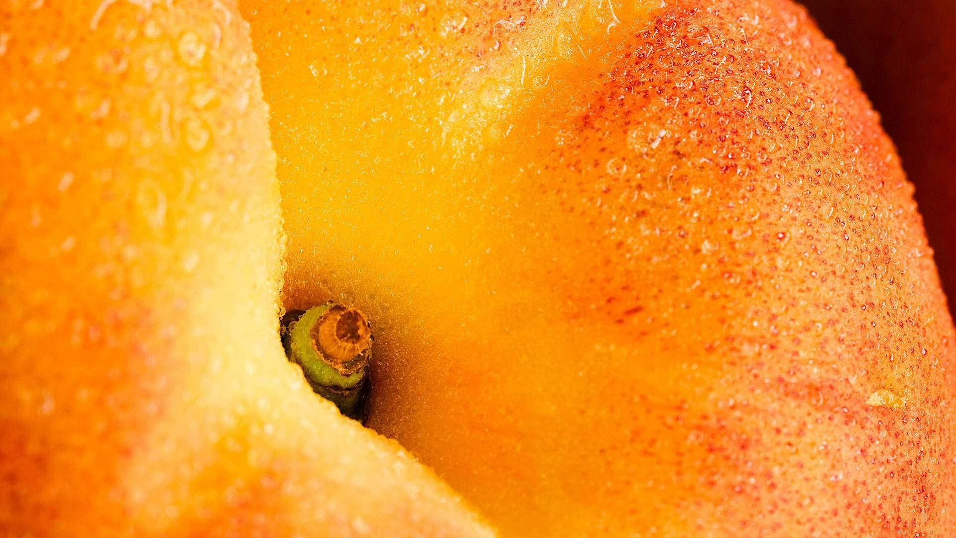 apple macro wallpaper