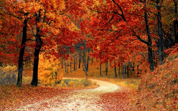 autumn forest path wallpaper background