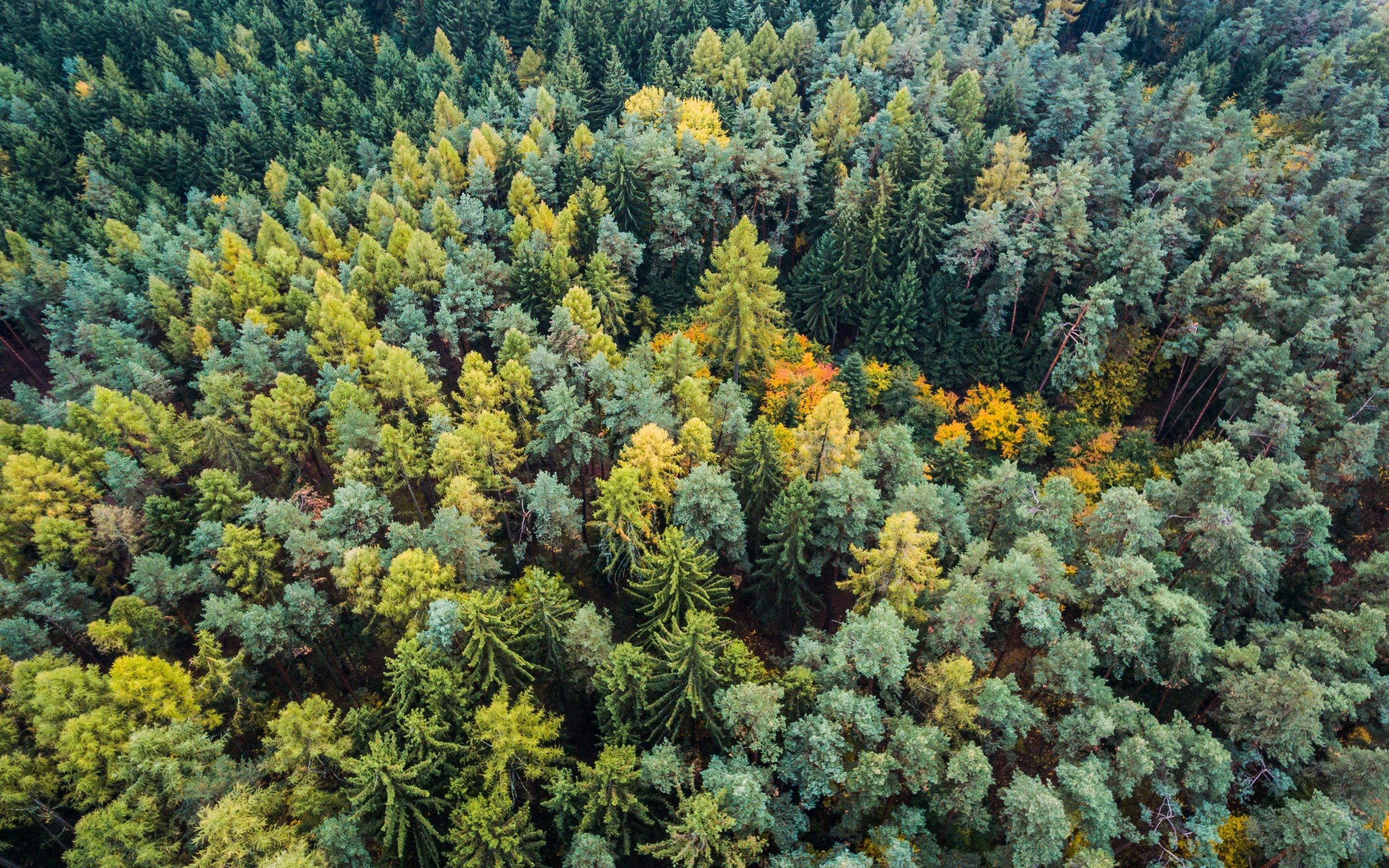 autumn forest wallpaper background