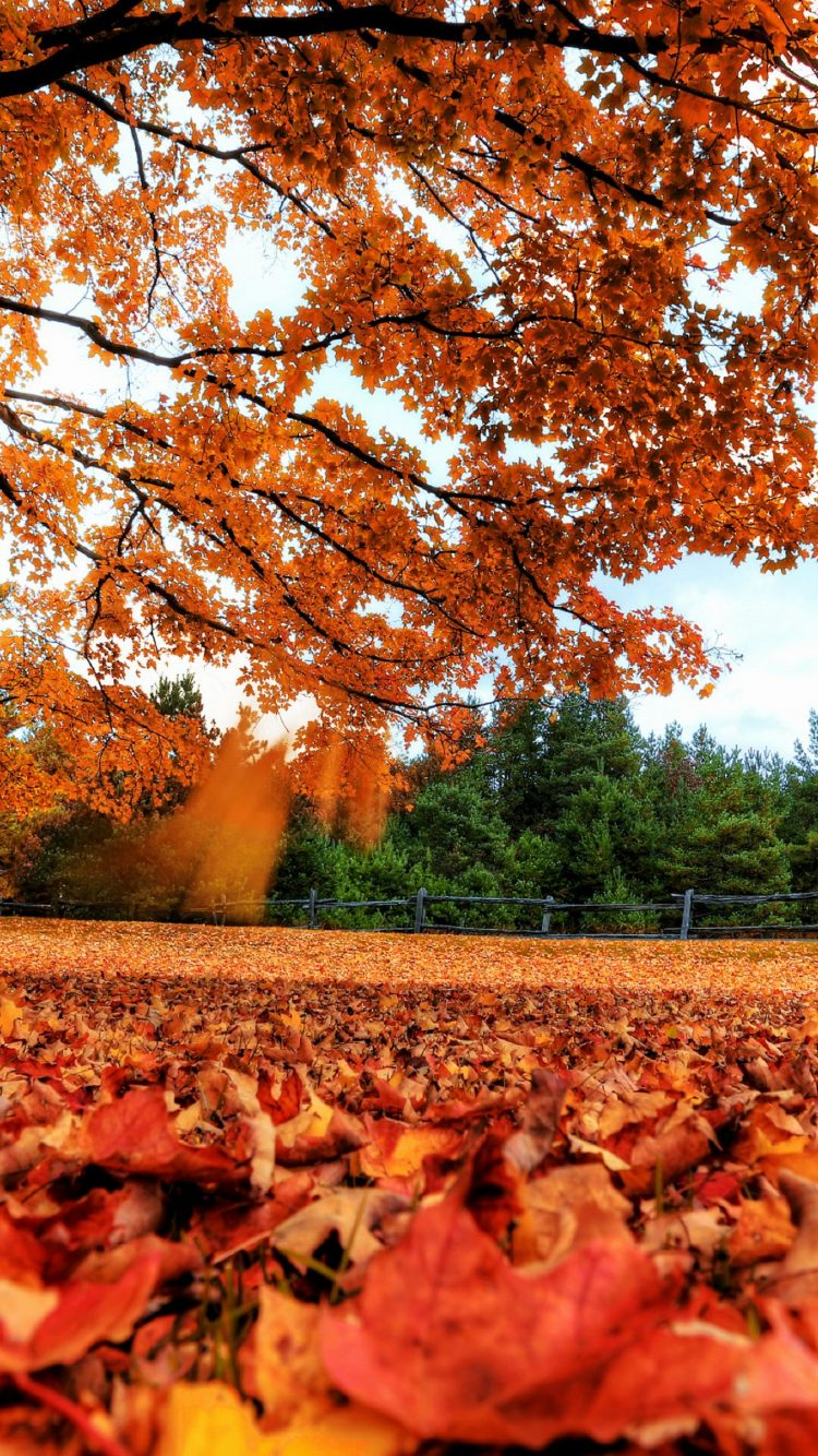 Autumn Leaves 4K Wallpaper   HD Wallpaper Background