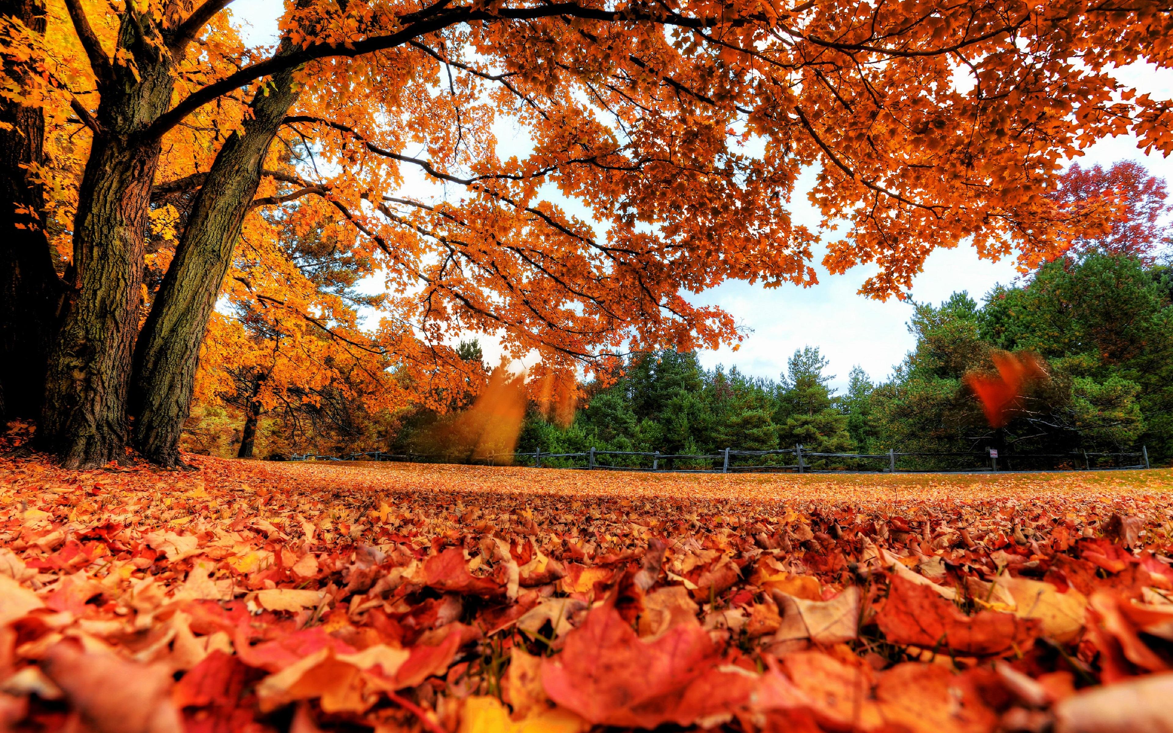 Обои leaves, trees, autumn. Природа foto 10
