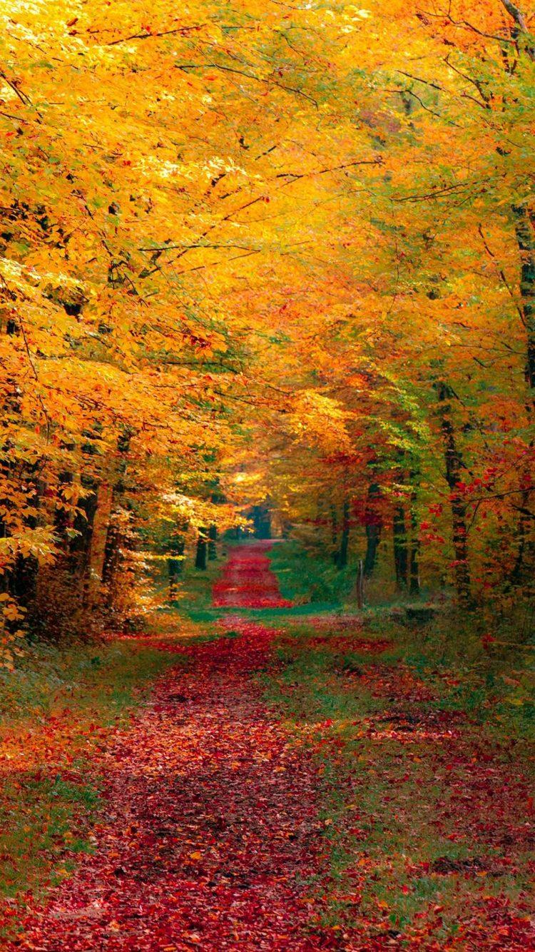 Autumn Trees Wallpaper 4K   HD Wallpaper Background