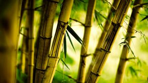 Bamboo Close Up Wallpaper Background