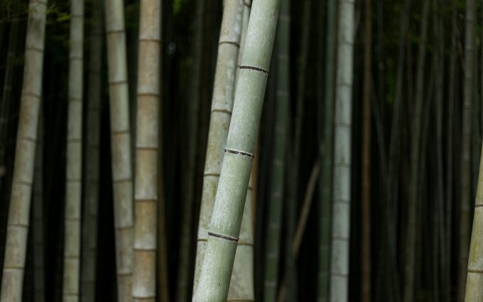 bamboo wallpaper 4k 5k background