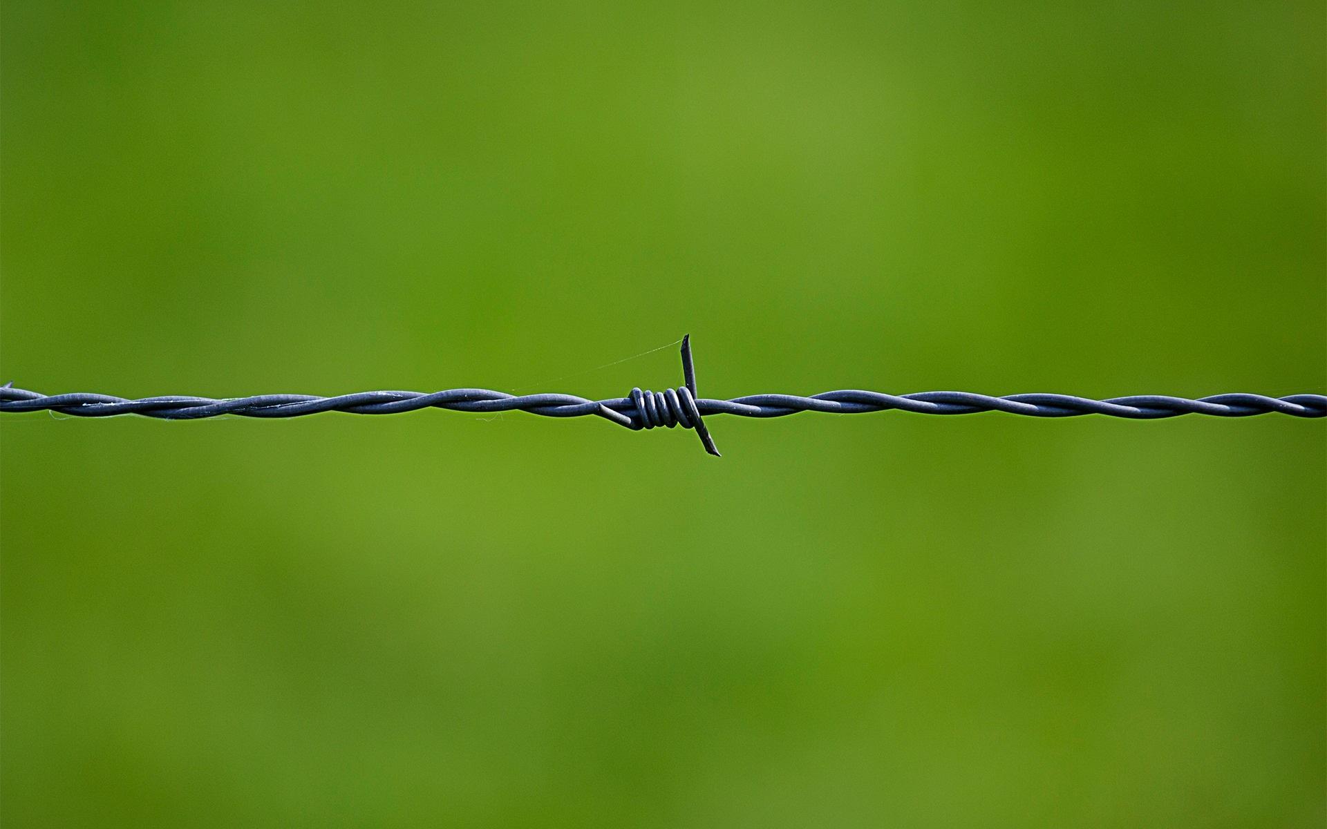 barbed wire close up wallpaper background
