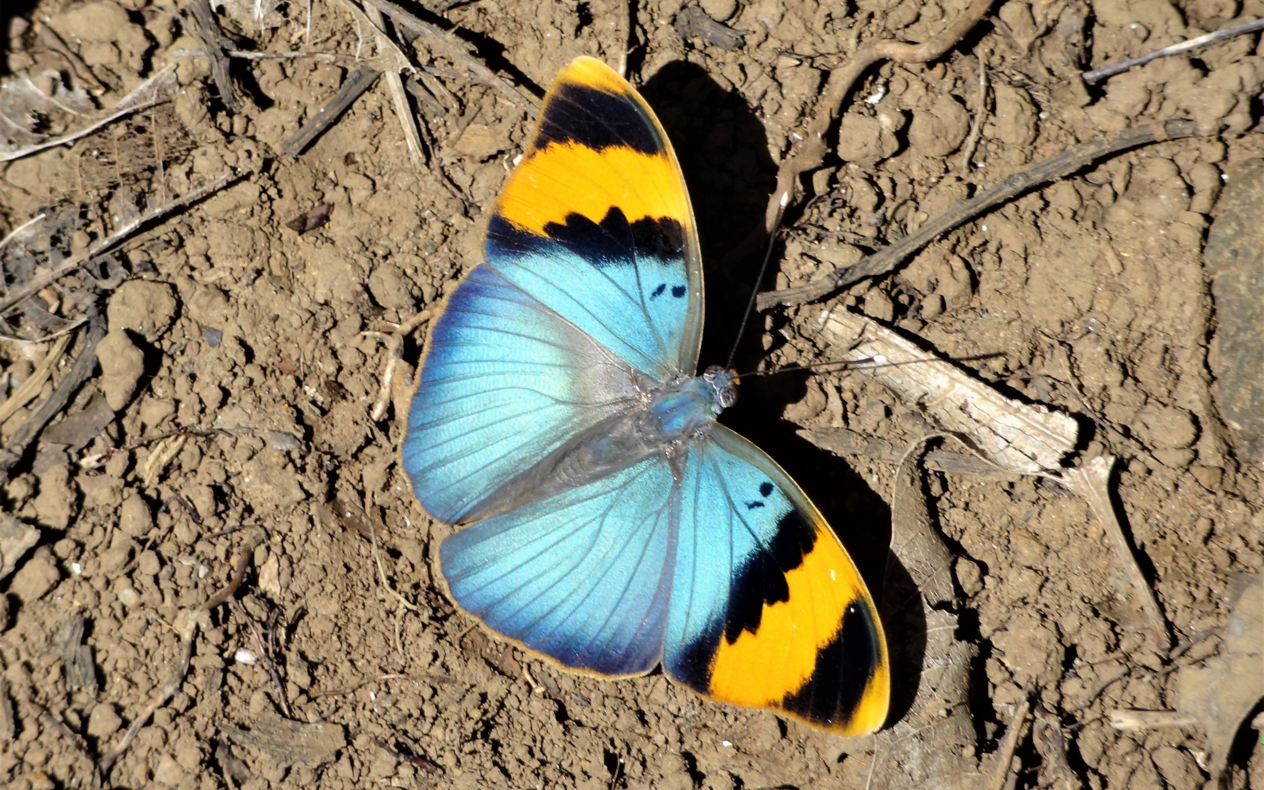 Beautiful Butterfly Wallpaper Background Hd Wallpaper Background
