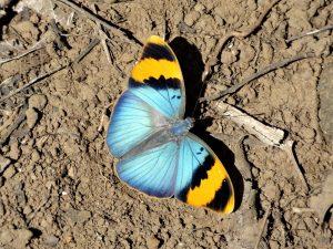 Beautiful Butterfly Wallpaper Background