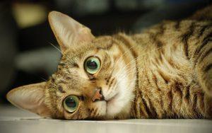 Beautiful Cat Eyes Wallpaper