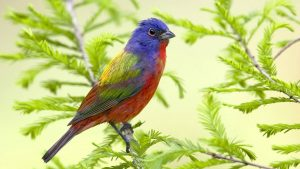 Beautiful Colored Bird Wallpaper Background