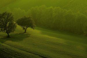 beautiful green trees wallpaper