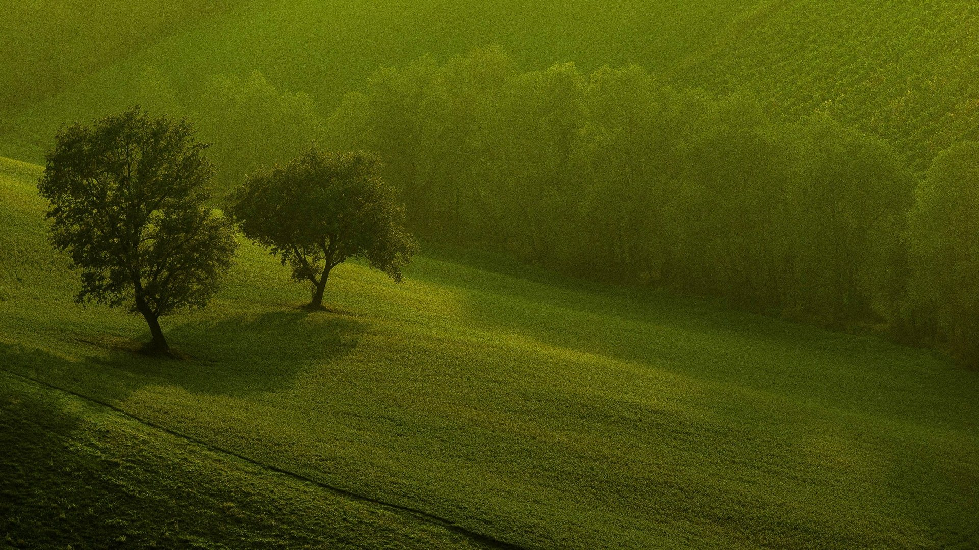 beautiful green trees wallpaper