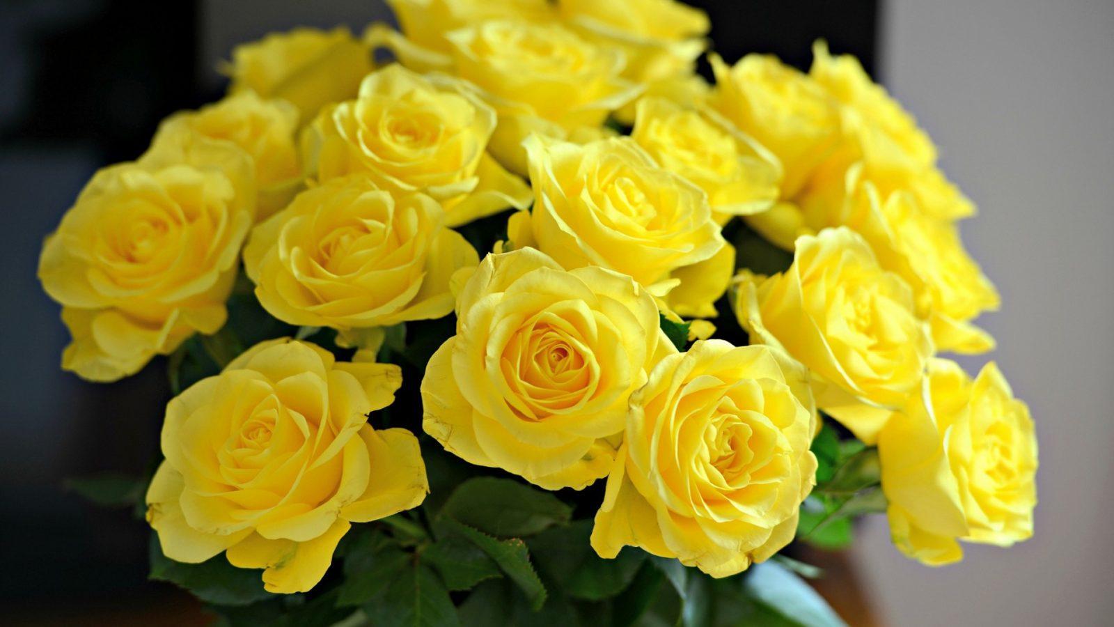 Beautiful Yellow Roses Wallpaper Hd Wallpaper Background