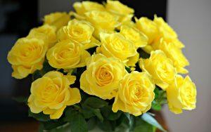 Beautiful Yellow Roses Wallpaper