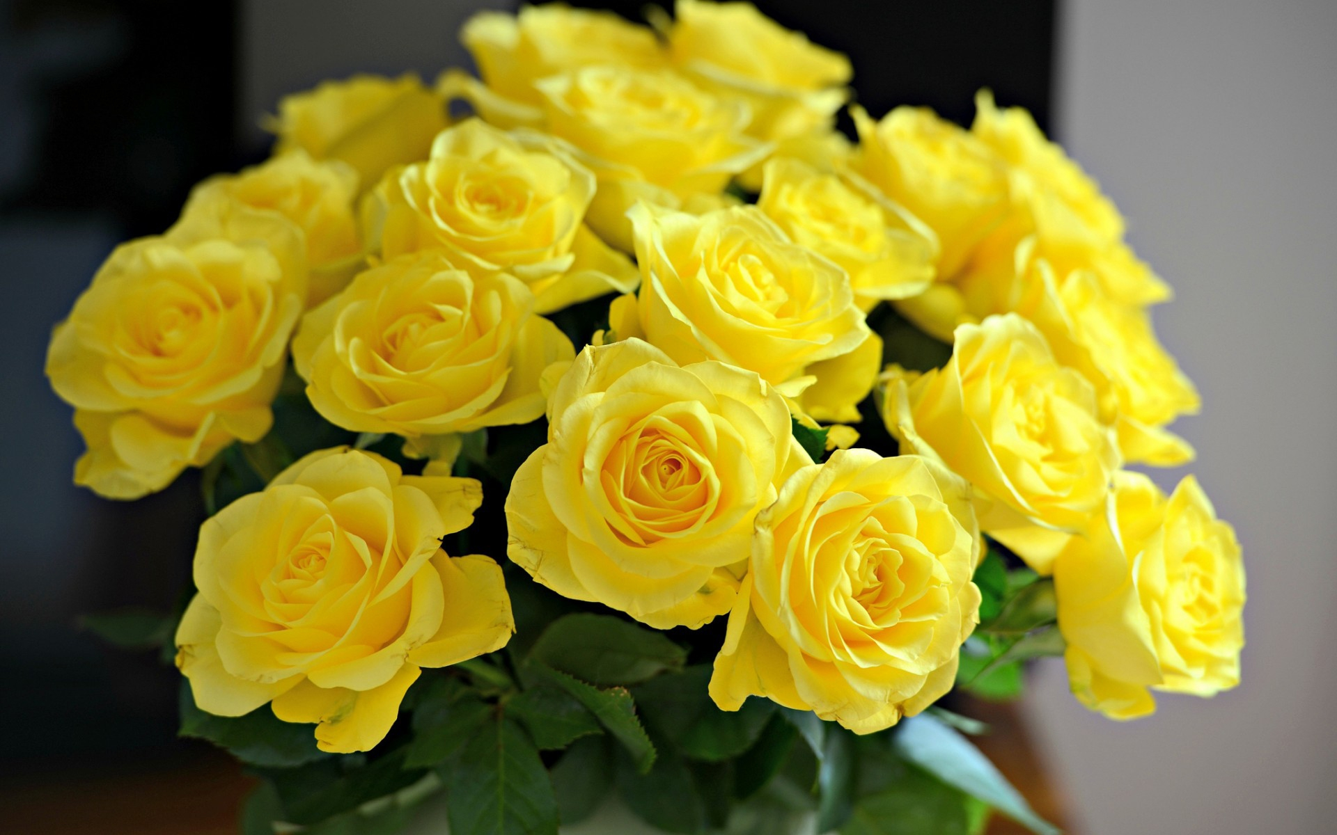beautiful yellow roses wallpaper