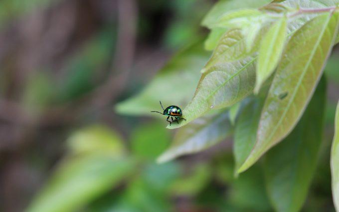 beetle on green leaf wallpaper 4k 5k background
