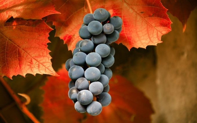 black grapes wallpaper background