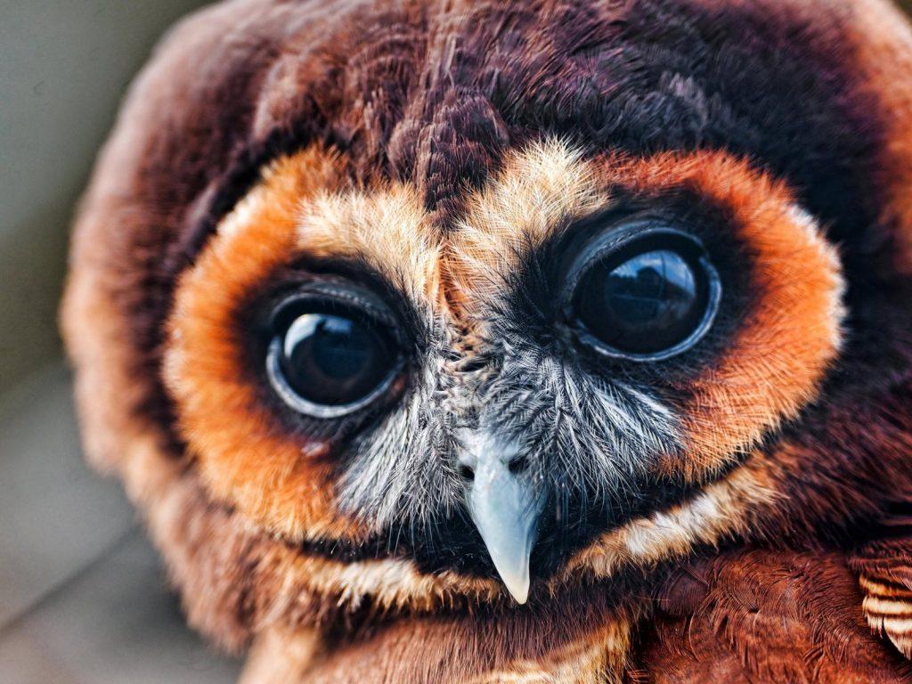 Black Owl Eyes Wallpaper   HD Wallpaper Background