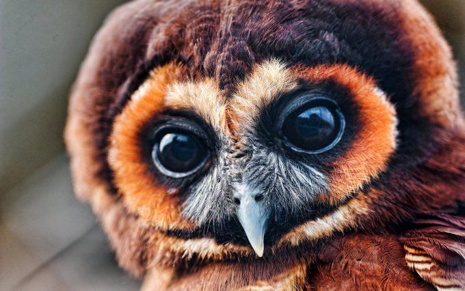 black owl eyes wallpaper