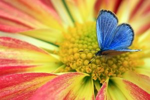 blue butterfly on flower wallpaper background