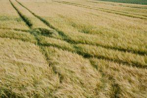 Brown Grass Wallpaper 4K Background