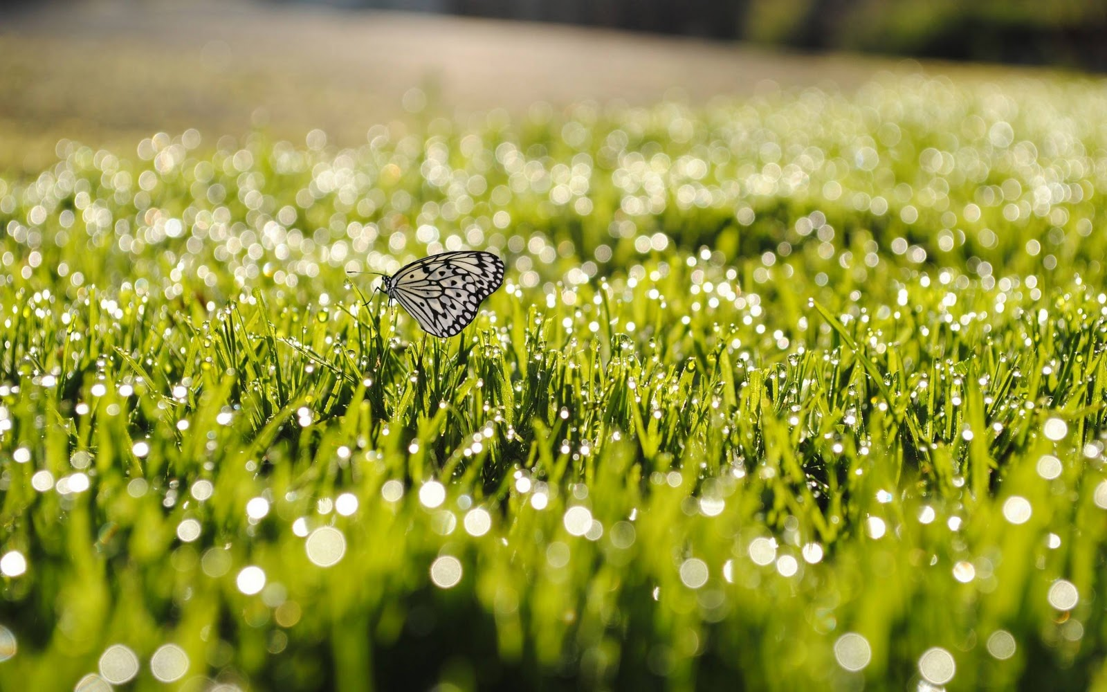 butterfly on grass wallpaper background