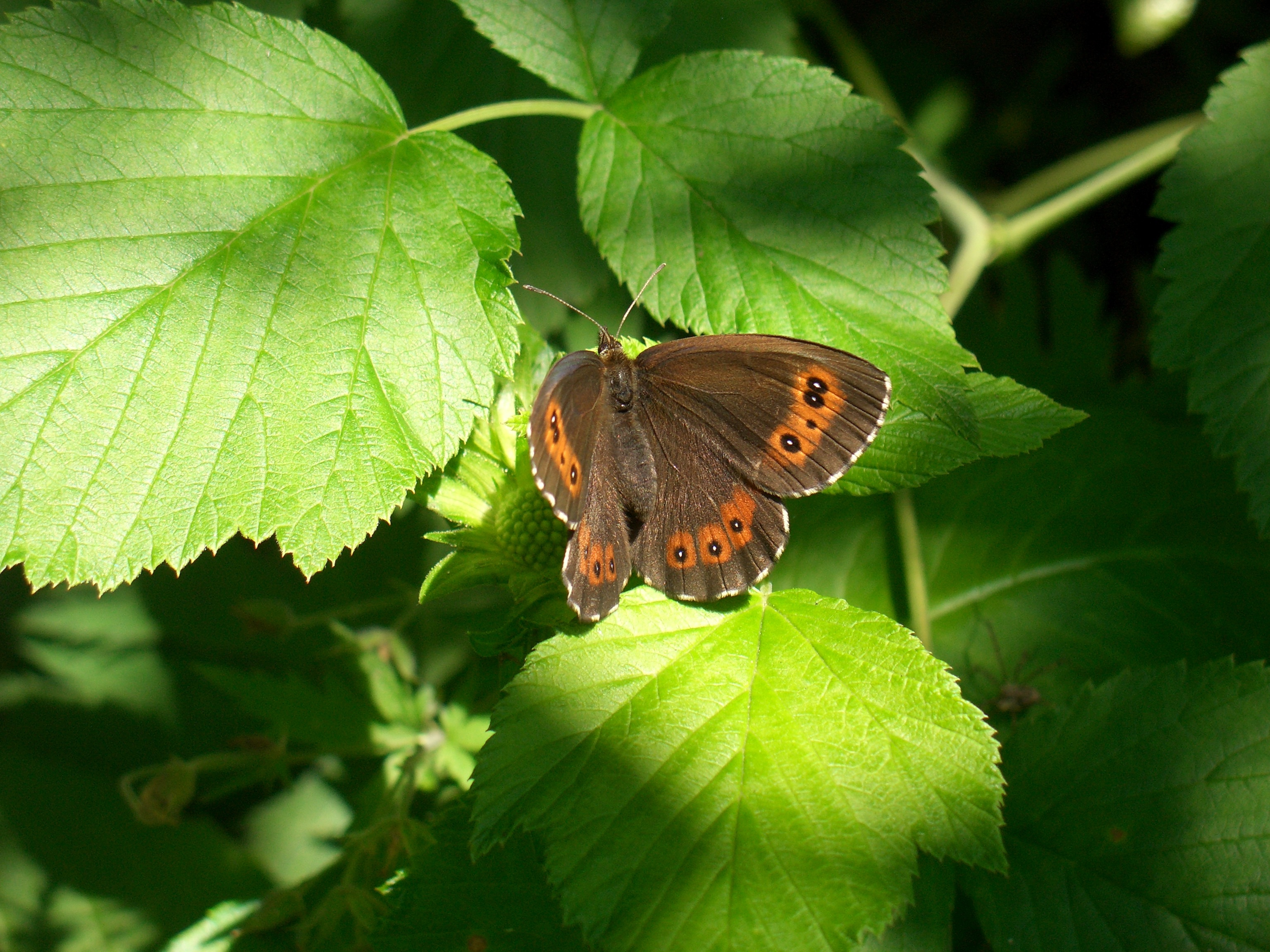 butterfly on leaf wallpaper background