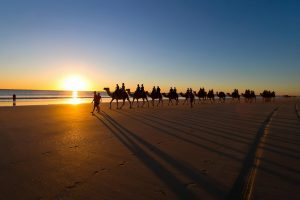 camels on beach wallpaper background