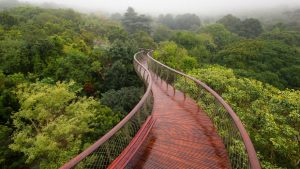 Canopy Walkway Wallpaper