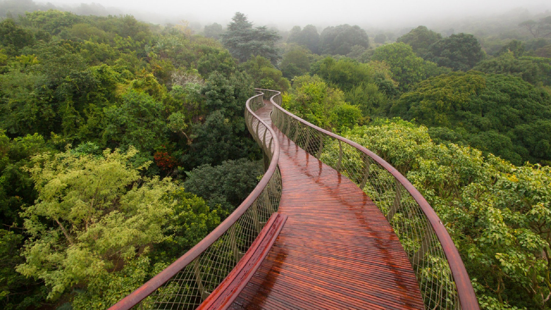 canopy walkway wallpaper background