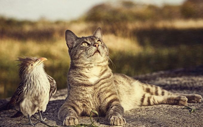 cat and bird wallpaper background