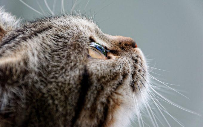 cat eye 4k 5k wallpaper