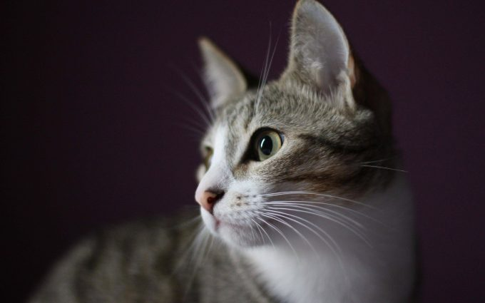 cat eye 4k wallpaper background