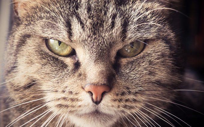 cat eyes close up wallpaper 4k background