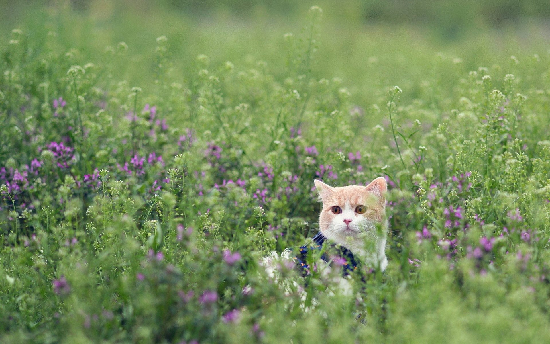 cat in flowers wallpaper background
