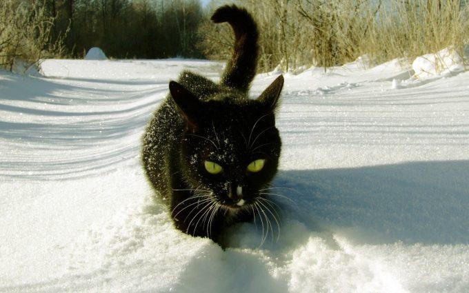 cat in snow wallpaper background