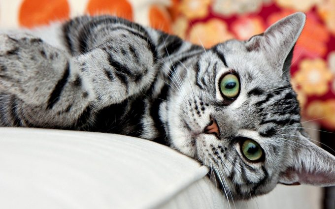 cat on bed wallpaper background