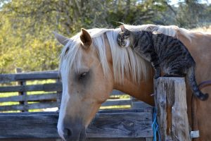 cat with horse wallpaper background