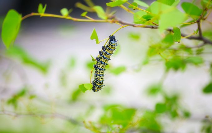 caterpillar close up wallpaper background