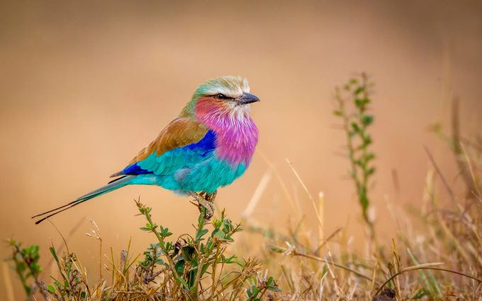 colorful bird wallpaper background