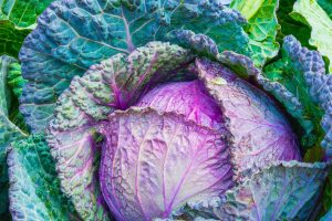 Colorful Cabbage Wallpaper