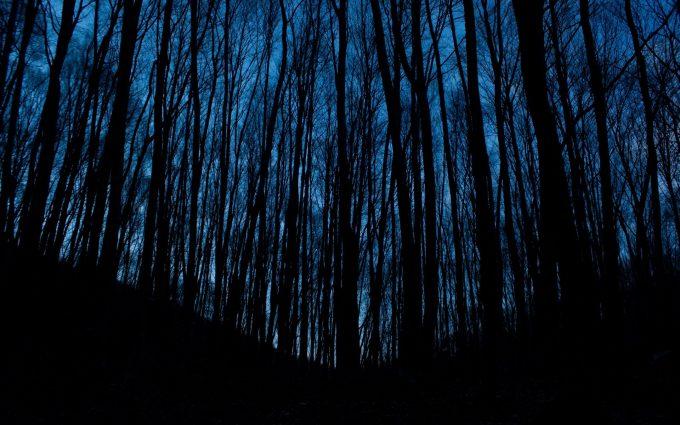 dark trees wallpaper background