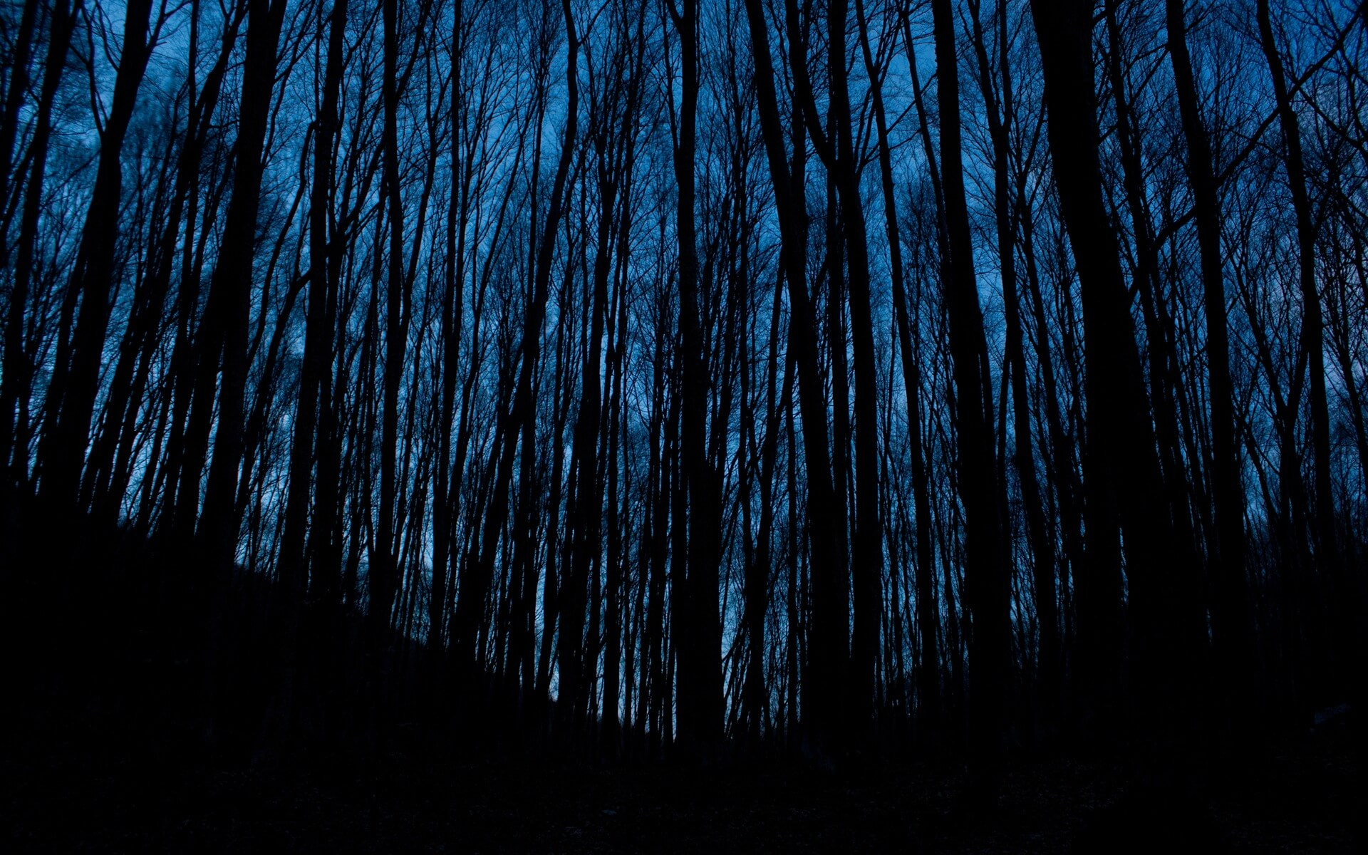 dark trees wallpaper background