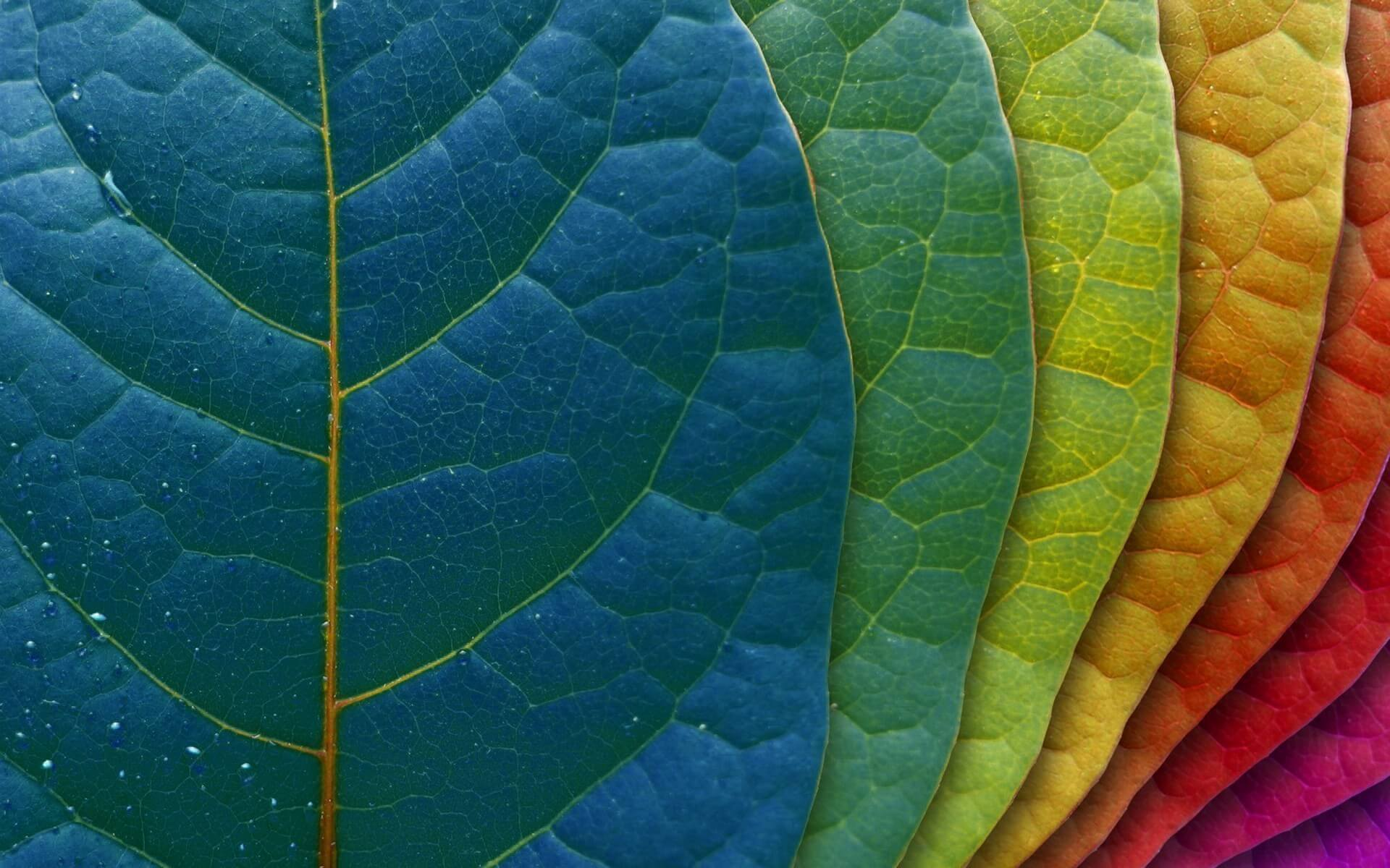 different color leaves wallpaper background