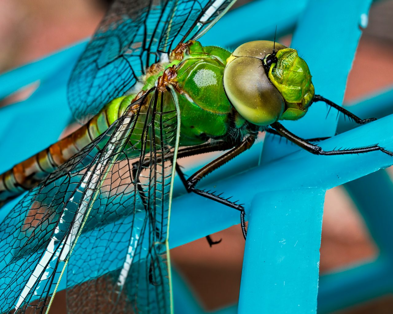 Dragonfly wallpaper Gallery Beautiful and Interesting Images