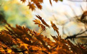 Dry Brown Leaves Wallpaper