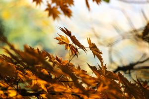 dry brown leaves wallpaper background